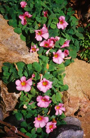 Plant identification pat welsh organic and southern california question from charlie mightylinksfo