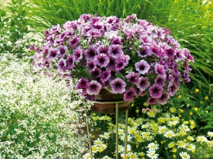 July flowers to plant now in spring for summer wedding pat welsh question from jackie mightylinksfo
