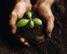 question - Vegetable Garden Soil